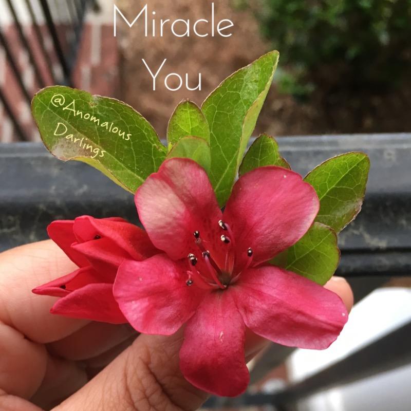 Miracle You.jpg